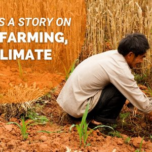Opportunity: Pitch us a Food, Farming, and Climate Story